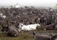 In herding brigade