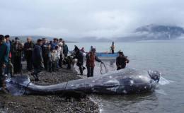 Whale festival. New Chaplino community