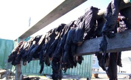Uelen community. Whale meet drying