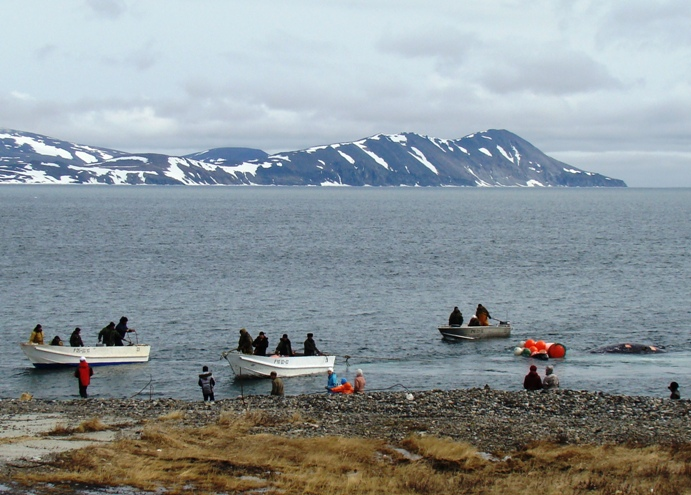 People from Novoe Chaplino meet the first whale. June 11, 2011. Photo by N. Kalyuzhina