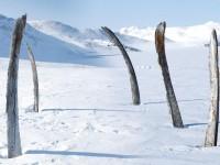 Китовая Аллея – кладбище или святилище?