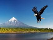 Корякский заповедник – дом для птиц и морских млекопитающих.
